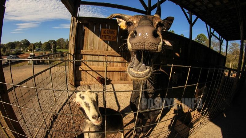 улыбающаяся корова