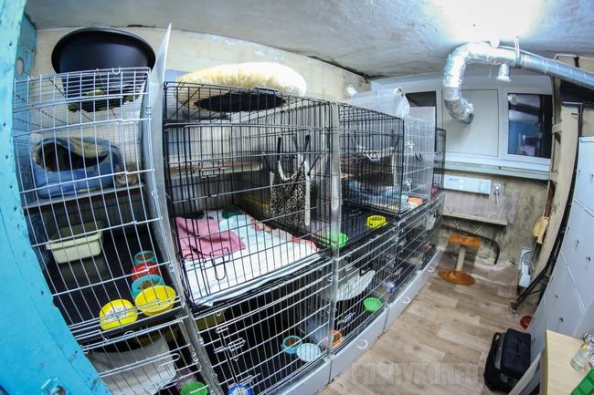 Приют для животных Суперкот в Минске