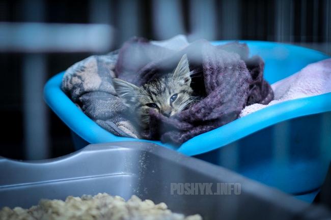 Частный приют для кошек в Минске