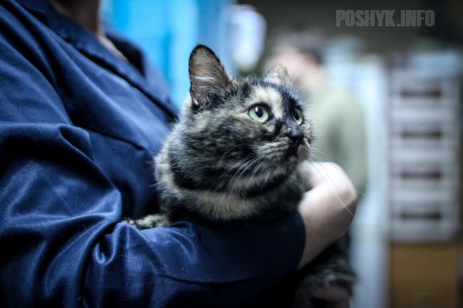 Приют для кошек в Минске Беларусь