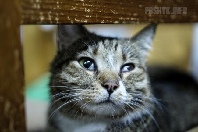 Приют котов в Минске