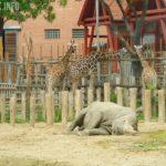 Уникальный зоопарк в Будапеште. Место, которое обязательно нужно посетить!