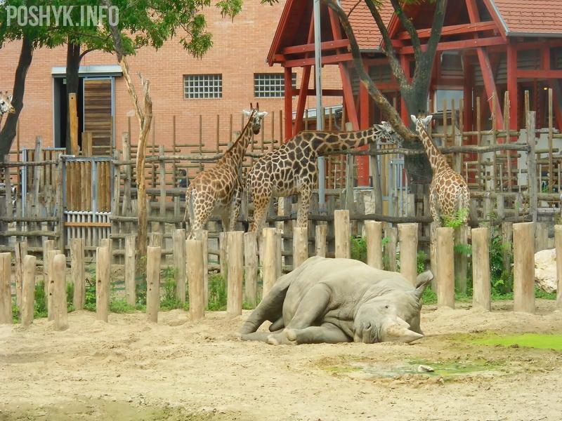 носорог фото будапешт