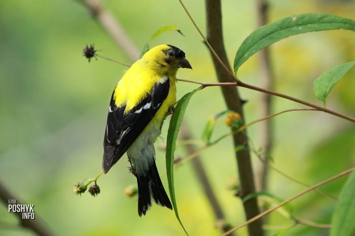 птичка фото