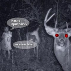 Призраки в замках Беларуси (Привидения Беларуси)