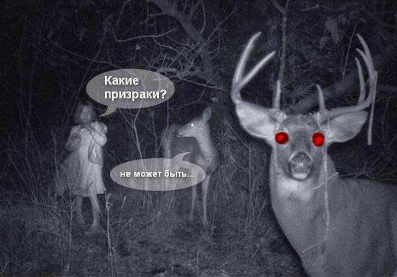 Призраки в замках