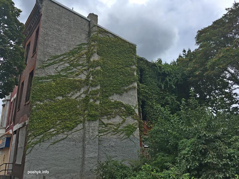 zelenay-zabroshka-v-listve