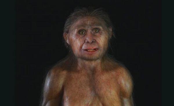 Homo floresiensis poshyk info