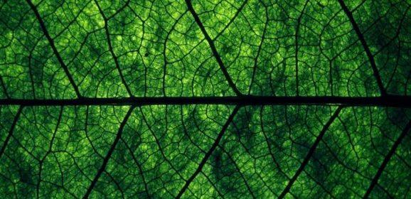 Проект — «Зеленая карта», найти свой экологический путь.