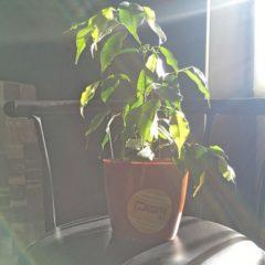 5 комнатных растений, с которыми управится любой мужчина