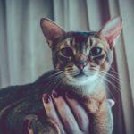 Без кота и жизнь не та, или Выставка кошек 2017