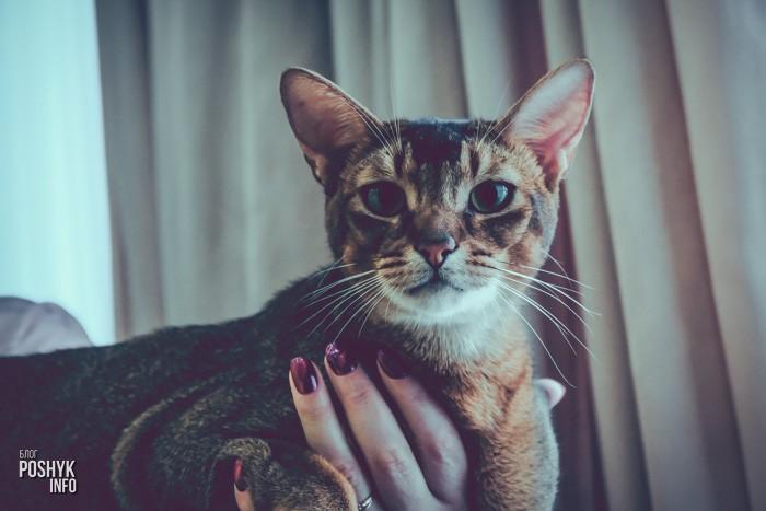 Выставка кошек 2017