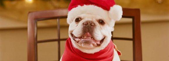Что приготовить на Новый год и не съесть собаку.