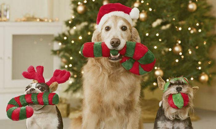 собаки новый год