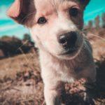 Порция умиления: факты о щенках