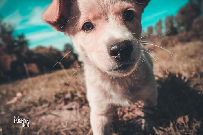 факты о щенках