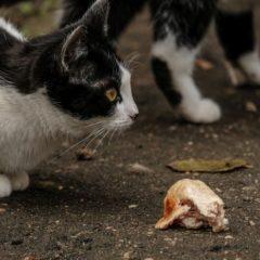 Как помочь бездомным животным? Минимум
