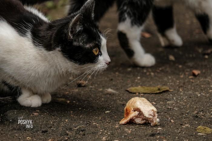 приют для животных в минске