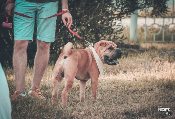собаки на fsp 2018