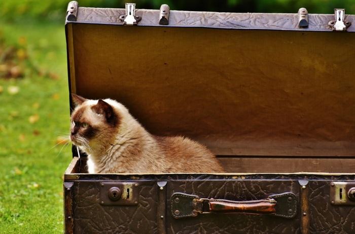 кот в багаже