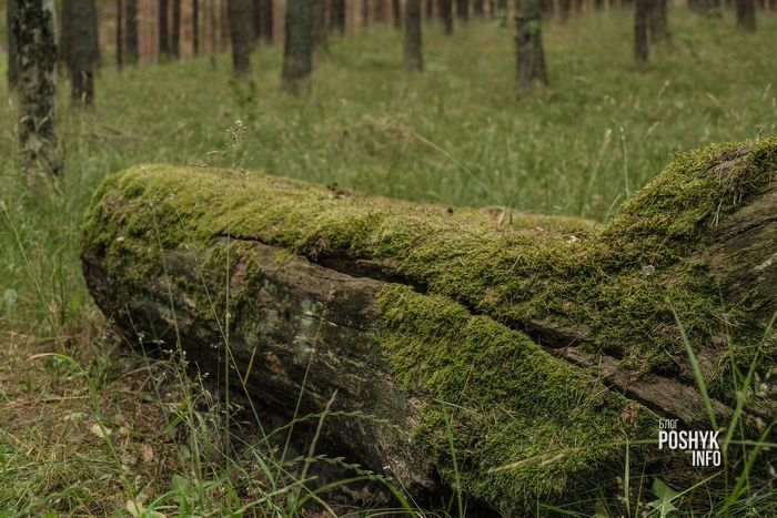 лес в клайпеде