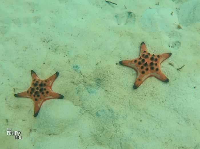 пляж звезд фукуок фото