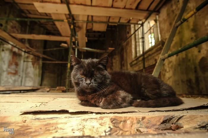 Котик в усыпальнице