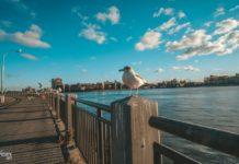 Остров Рузвельта в Нью-Йорке