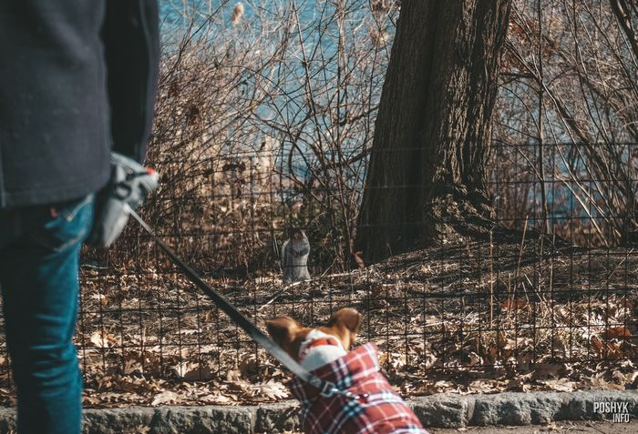 животные в центральном парке