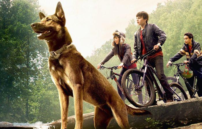 Интересные фильмы про животных