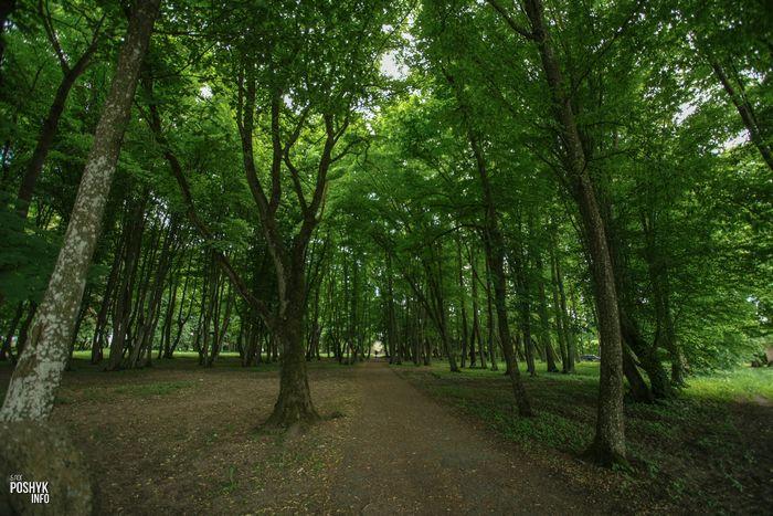 Парк Большое Можейково