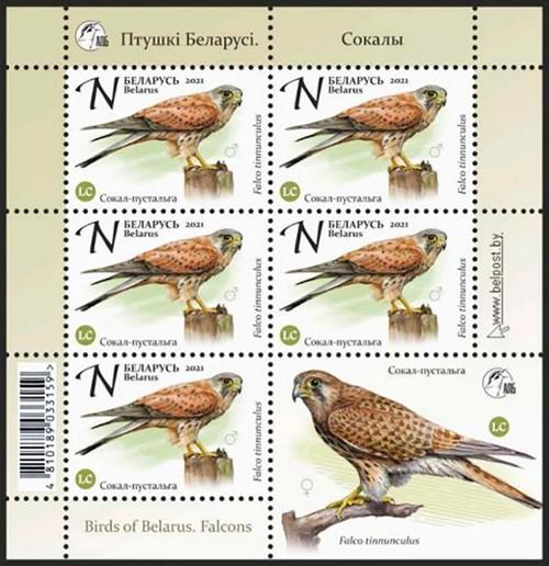 В Беларуси выходят соколиные марки из серии «Птушкі Беларусі»