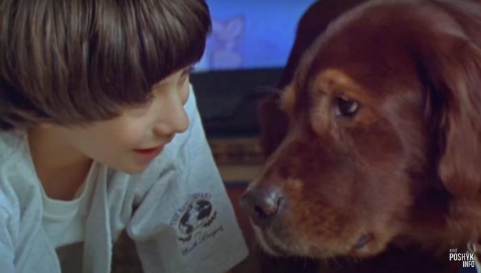 Старенькие, но очень хорошие фильмы про животных