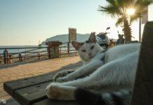 Алания Турция - интересные факты и местные котики