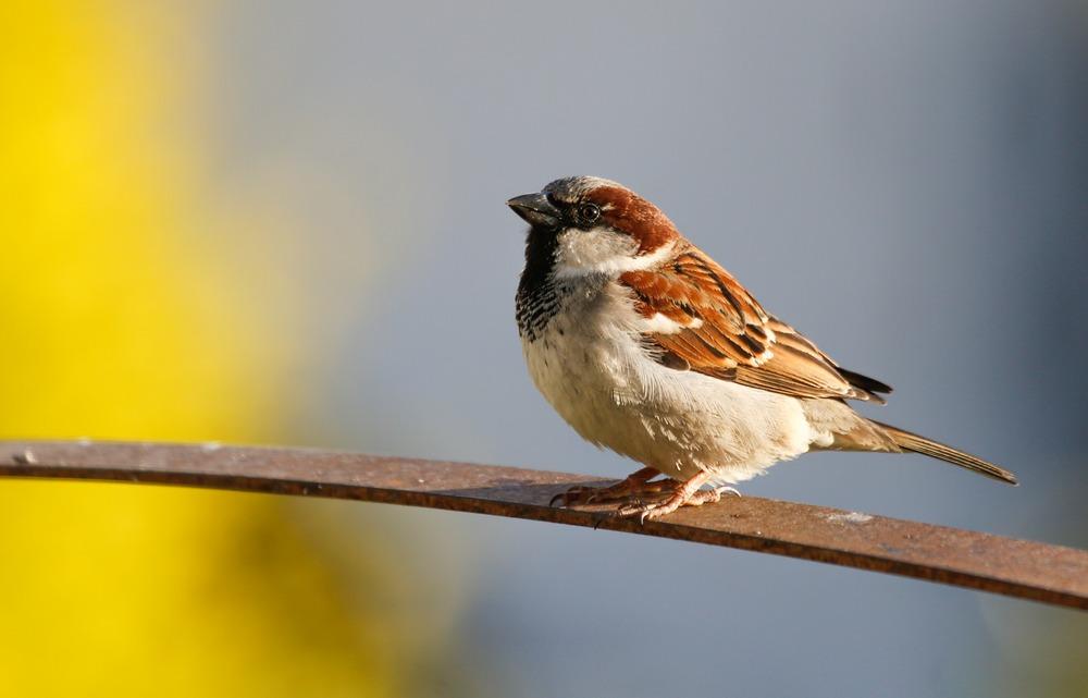 Птицы врезаются в окна – как их спасти?