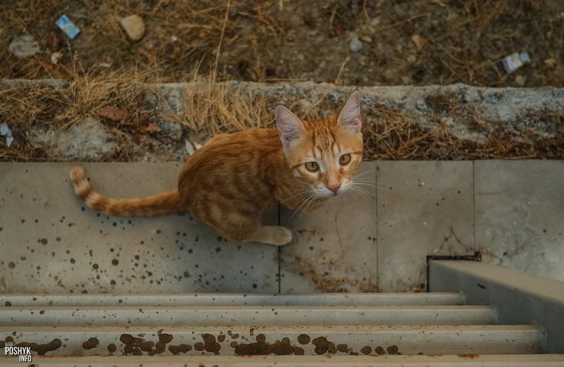 Турецкие котики в Алании