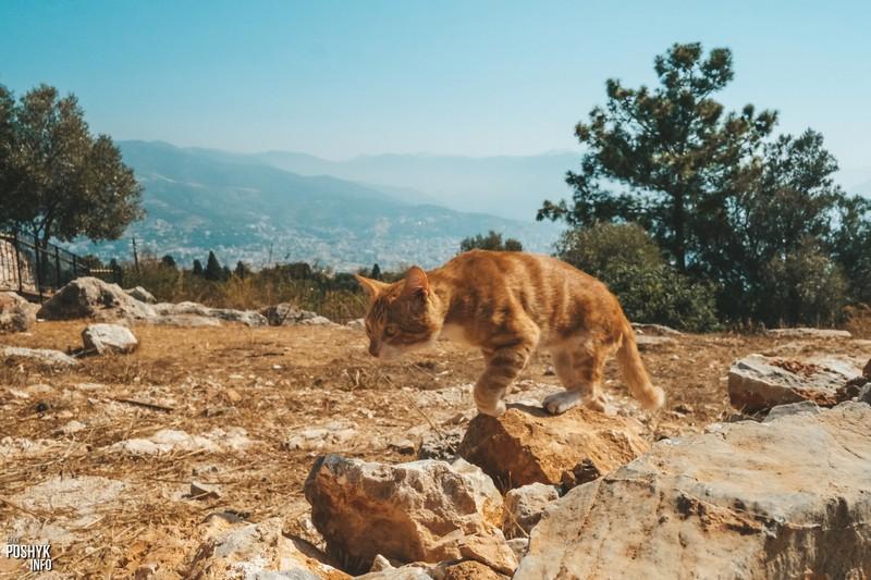 Коты Аланья и вид на Таврские горы